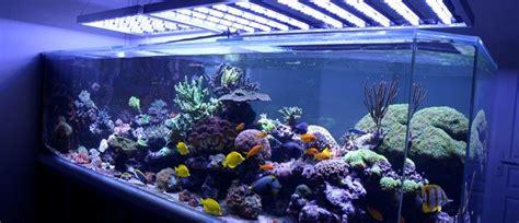 illuminazione per acquari acquario illuminazione a led agribrianza