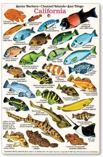 california  baja fish identification card fishcardscom