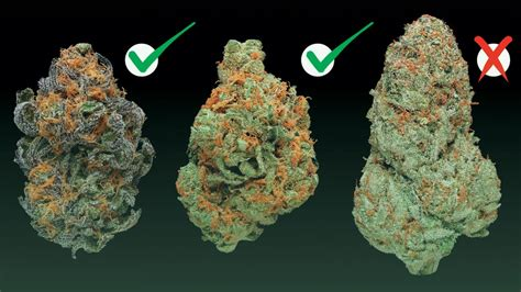Which Type Of Weed Is Right For You?
