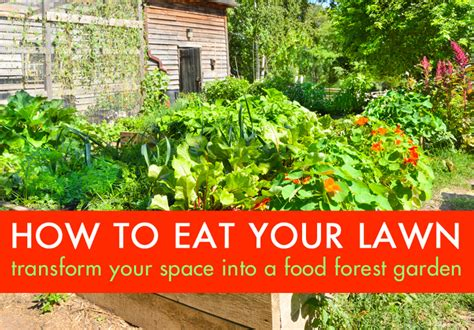 how to eat your lawn transform your wasteful grassy space