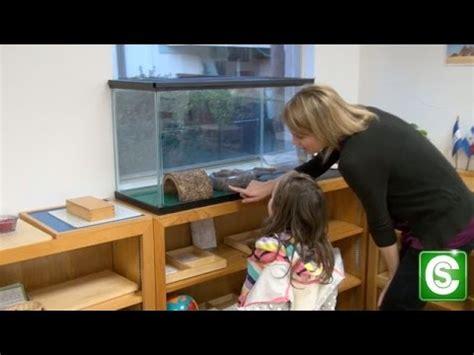how to become a preschool at a school 395 | hqdefault