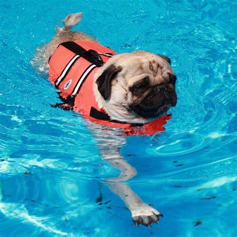 schwimmweste fuer hunde orange puppy prince