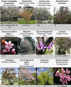 Kleiner Baum Garten : kleine b ume kleiner baum f r den garten ~ Lizthompson.info Haus und Dekorationen