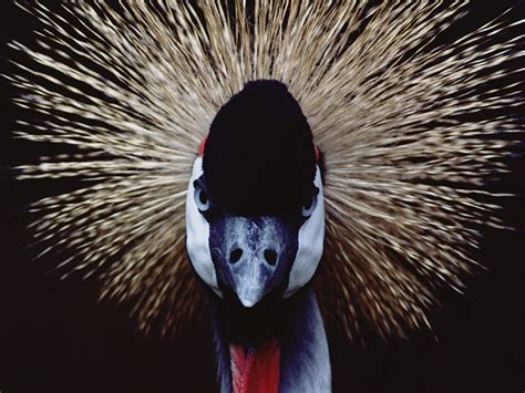 photographing wildlife photo tips national geographic