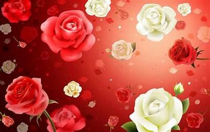 Rose Colorful Roses Pink Wallpapers Background Desktop