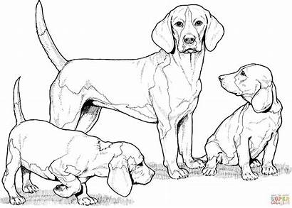 Coloring Pages Realistic Puppy Beagle Puppies Printable