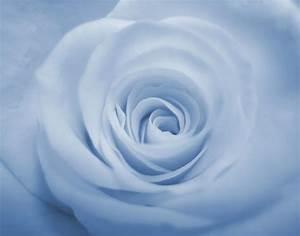 Blue Rose Backgrounds - Wallpaper Cave