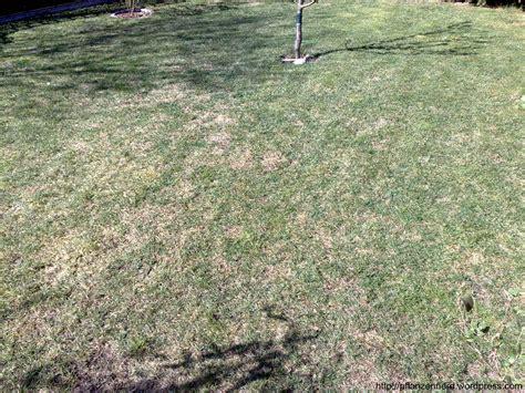 Rasen Nicht Vertikutieren by Vertikutieren Oder Wie Aus Einem Rasen Einen