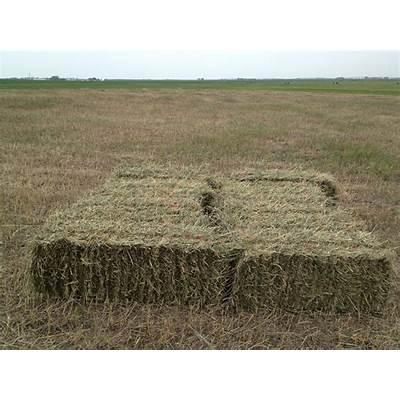 prairie hayFeed Yard Foodie