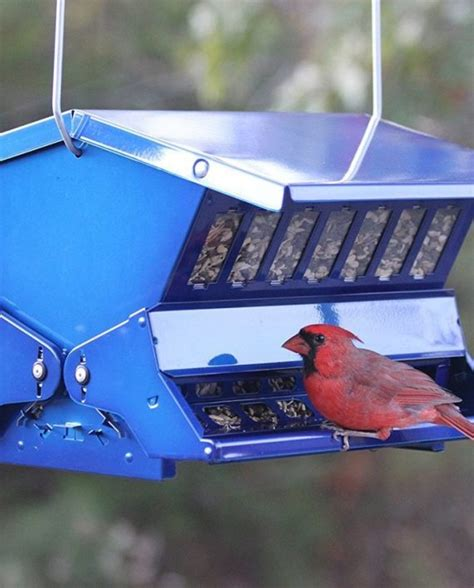 electric blue absolute ii bird feeder by woodlink