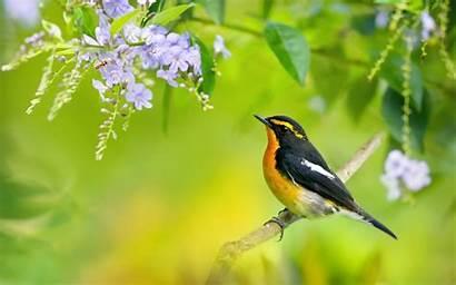 Sparrow Beautifull Birds Wallpapers Bird
