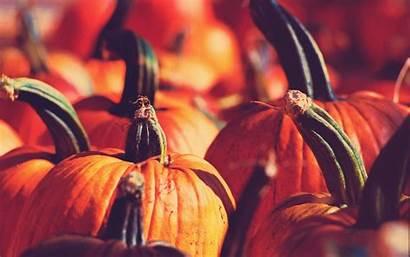 Fall Pumpkins Pumpkin Desktop Wallpapers Widescreen Backgrounds