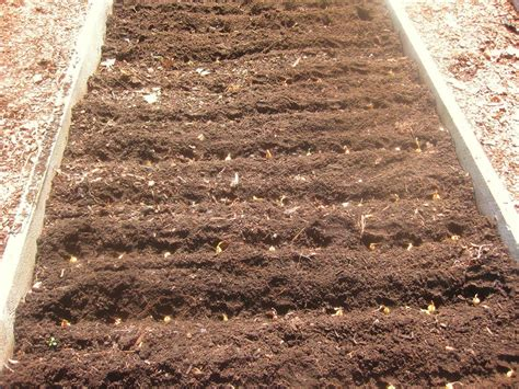 Best Soil For Raised Vegetable Garden Beds