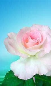 Beautiful HQ Artline Wallpaper : Rose on Wave ! ~ Artline ...