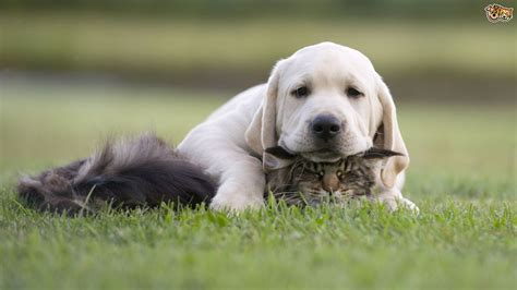 prevent  dog  chasing  attacking cats