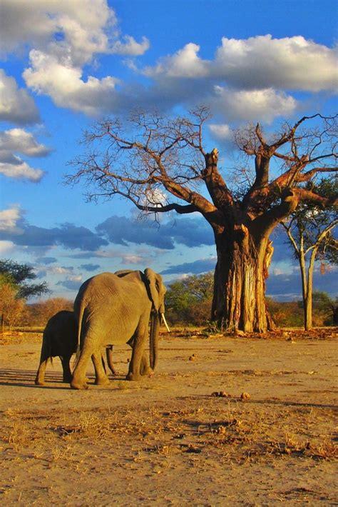 Adventures in Tanzania - Safari Blues (part 1   Tanzania ...