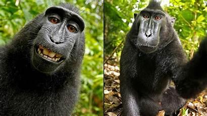 Monkey Selfie Peta Copyright Money Sues Publishing
