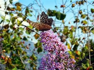 Taille Des Althéas : les conseils d une vieille branche a chacun son jardin ~ Nature-et-papiers.com Idées de Décoration