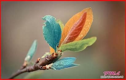 Nature Desktop Wallpapers Latest Backgrounds Picserio Beauty