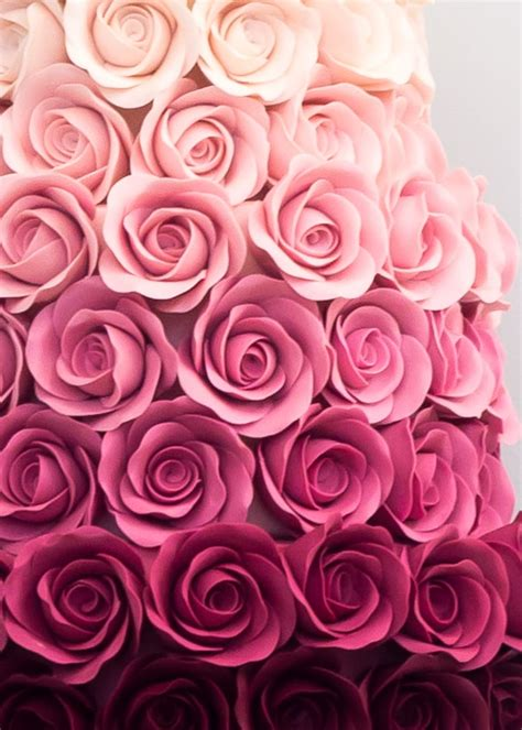 ombre rose rosalind miller cakes london uk