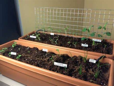 diy build self watering window boxes for the garden