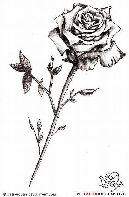 Rose Tattoo Single Stem Meaning Tattoos