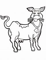 Cow Coloring Pages Eating Hay Cows Printable Clipart Cartoon Clip Fat Cattle Cliparts Skinny Colouring Boyama Library Inek Sayfası Getcoloringpages sketch template