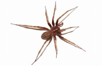 Spiders Spider Tn Nashville Removal Memphis Mt