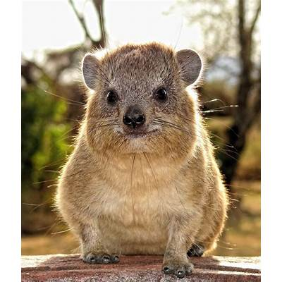 The Creature Feature: 10 Fun Facts About the Rock Hyrax