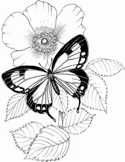 Coloring Pages Butterfly Flower Printable Adult Flowers