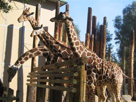photos for fresno chaffee zoo yelp