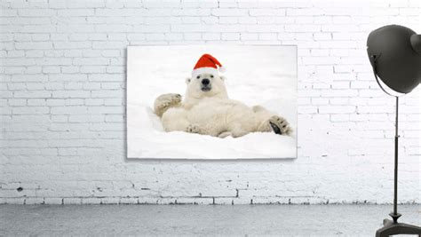Polar Bear Wearing Santa Hat Lying On Its Back In Snow At