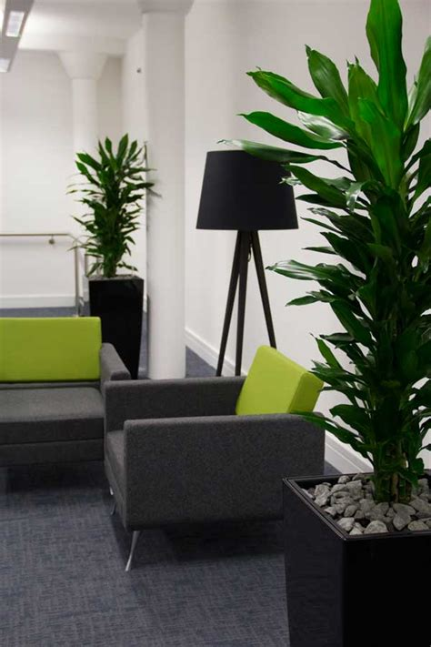 office plants improve  workplace heres
