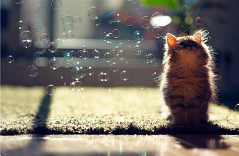 adorable  cutest cat  collection vote