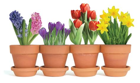 pictures of potted flowers spring potted flowers easter card paper house