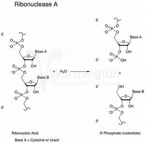 Enzyme Manual  Ribonuclease B