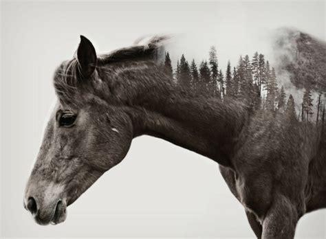 süße pferde bilder sch 246 ne pferde bilder die die gro 223 artigkeit der pferde zeigen
