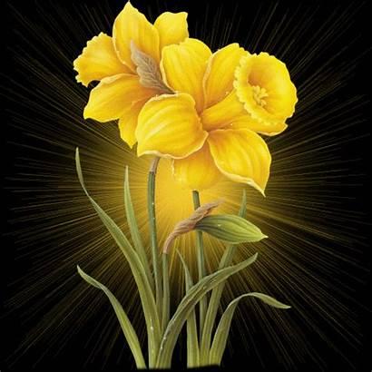 Flowers Glitters Glitter Yellow Graphics Myspace Code