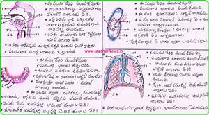 10th    Ssc Biology Diagrams Public Exam For Ap    Ts