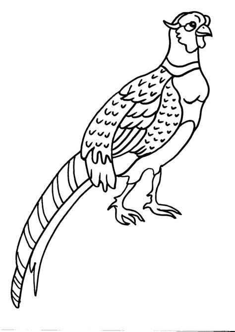 disegni da colorare uccelli uccelli da colorare per bambini con disegno civetta da