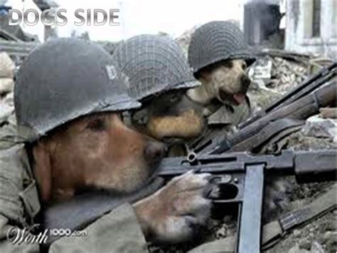 war  cats  dogs youtube