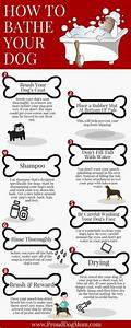 Andis Poodle Chart Dog Grooming Clipper Blade Chart By Breed And Coat Type
