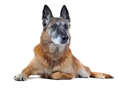 honden verzorging en medische zorg dierendokters