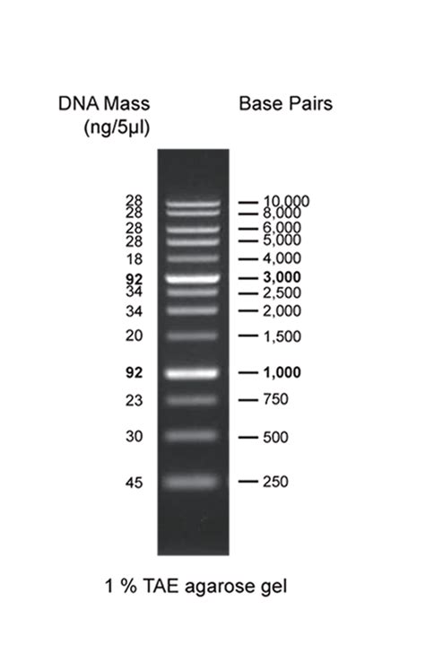 AccuRuler 1kb DNA Ladder, 02003-500 - Maestrogen Inc.