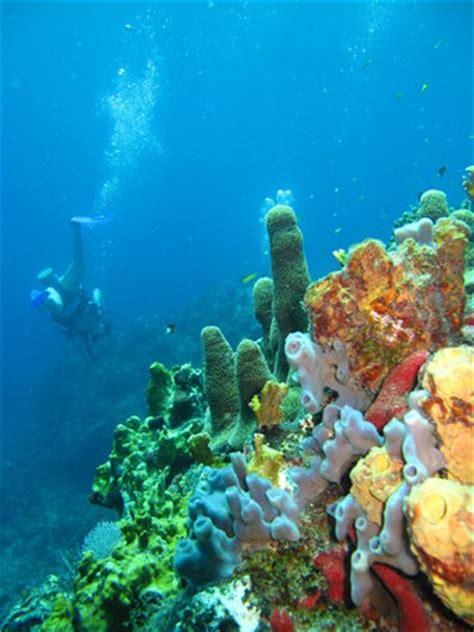 st thomas diving club bolongo bay
