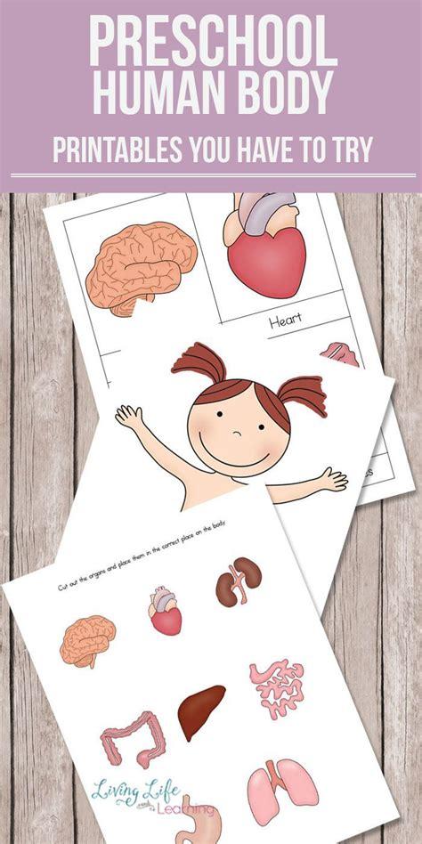 preschool human body printables body preschool human