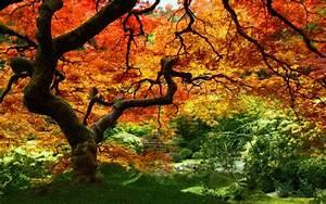 Amazing Nature Autumn Leaves Background Desktop Free ...