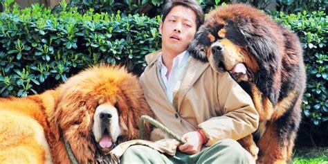 voici le chien le plus cher du monde dh be