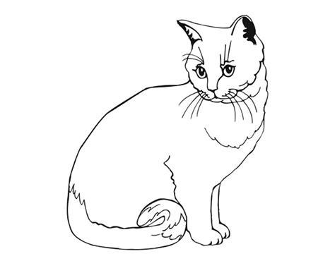belajar mewarnai hewan kucing belajarmewarnai info