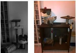Arbre à Chat Fait Maison : arbre chat fait maison forum entretenir son chat persan wamiz ~ Melissatoandfro.com Idées de Décoration